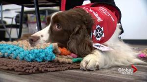 Therapy dogs provide comfort after Humboldt Broncos bus crash